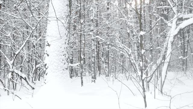 Snowbound landscape in the forest.