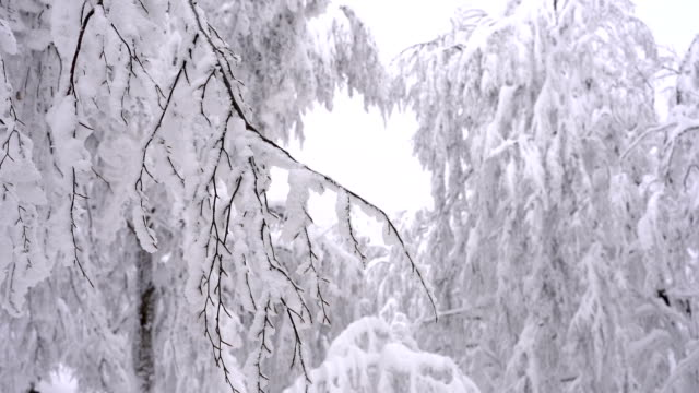 snowcapped branches - bare tree stock videos & royalty-free footage