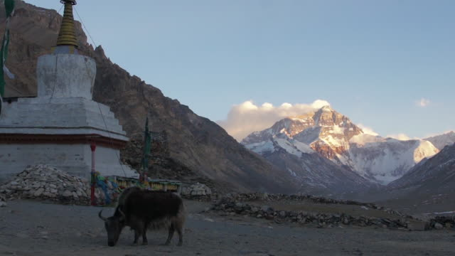 snowcapped Mt. Everest and Stupa, Tibet