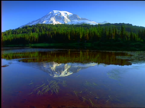 Snow-capped Mt. Rainier rising behind evergreen trees + water in foreground / Washington State