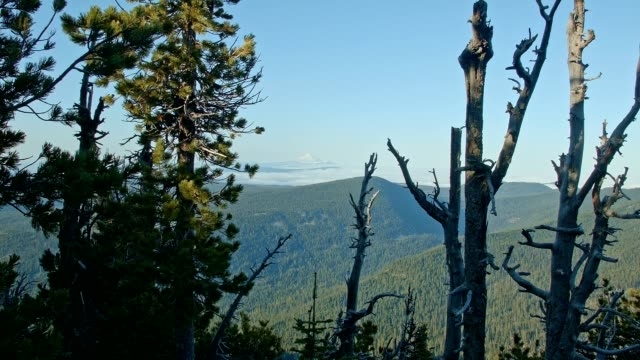 snowcapped volcanic mountain with fog and mist wide 2 mt. jefferson oregon 3 - wide stock videos and b-roll footage
