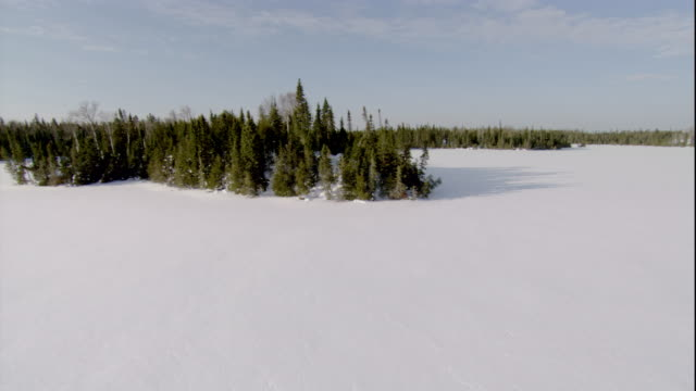 a snow-covered boreal forest borders a frozen inlet. available in hd. - boreal forest stock videos and b-roll footage