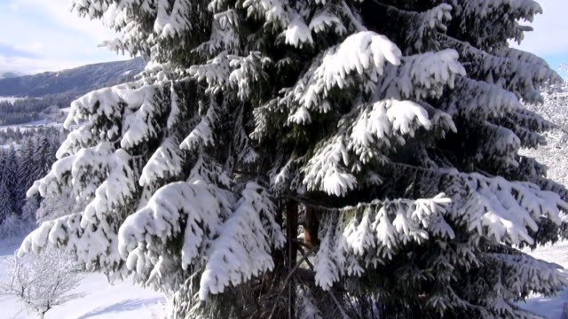 a snow-covered conifer towers above a vehicle in the alps. - bo tornvig stock videos & royalty-free footage