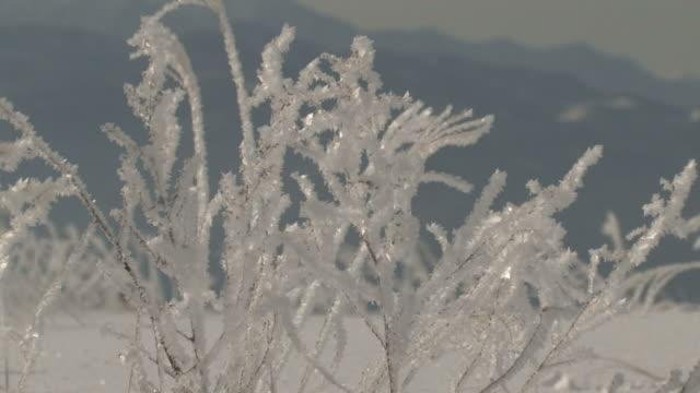 zo snow-covered grass - 冬点の映像素材/bロール