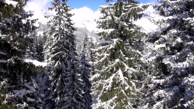 snow-covered mountains and trees tower under blue skies. - bo tornvig stock videos & royalty-free footage