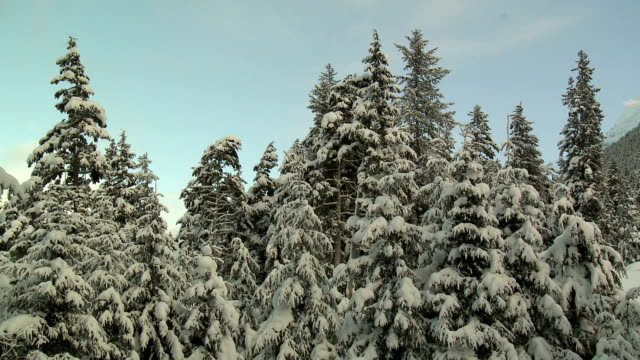 stockvideo's en b-roll-footage met snow-covered pine trees/clouds time lapse hd - zonnewijzer