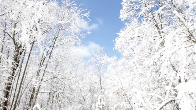 Schneebedeckte Bäume in Michigan Woods