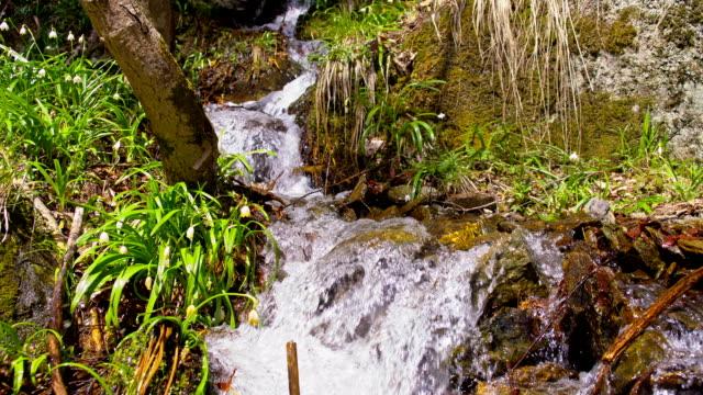 vidéos et rushes de ds snowdrops croissance by the creek - mousse végétale