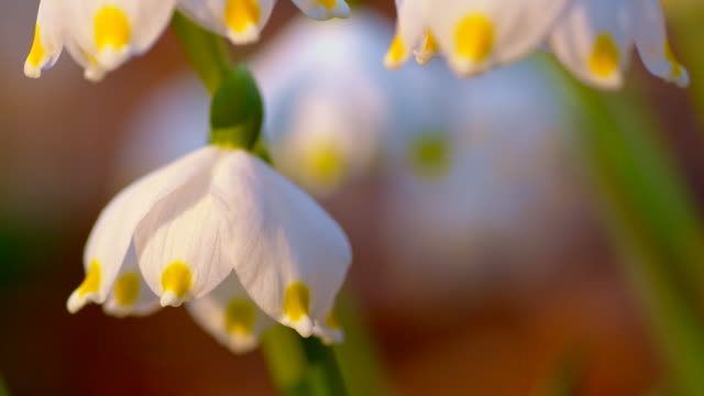 tu snowdrops - named wilderness area stock videos & royalty-free footage