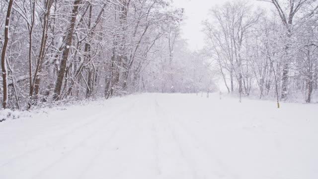 SLO MO 晩 Road の森