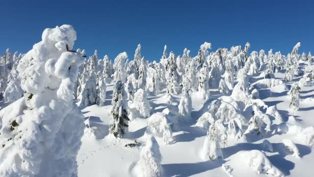 snowed trees in the mountains - snowcapped mountain stock videos & royalty-free footage