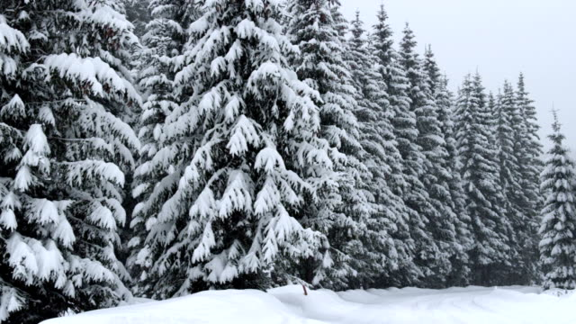 snowfall in a forest - triglav national park stock videos and b-roll footage