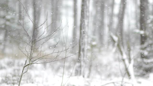 schneefall im bayerischen wald - schneien stock-videos und b-roll-filmmaterial
