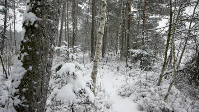 ババリア地方の森林の降雪 - ベルヒテスガーデナーランド点の映像素材/bロール