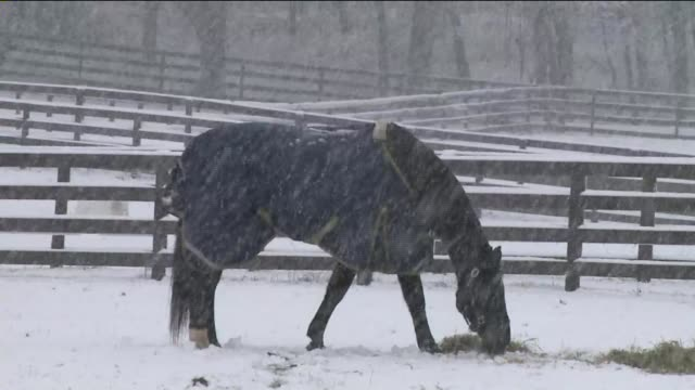 snowfall in long island a black horse grazing in the snow on december 10 2013 in hempstead new york - long island railroad stock videos and b-roll footage