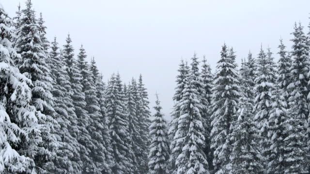 snowfall in mountain forest - julian alps stock videos and b-roll footage