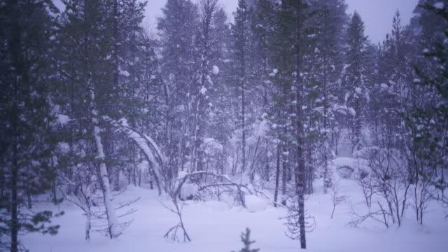 vidéos et rushes de chutes de neige dans la forêt - cristaux