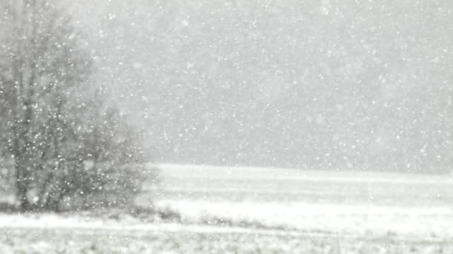 snowfall on blurred out landscape - blizzard stock videos & royalty-free footage