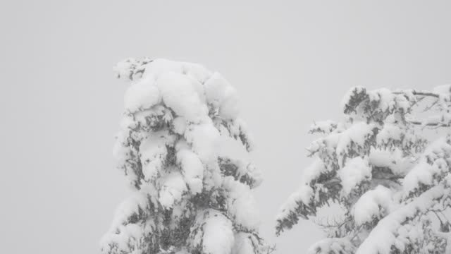 snowfall on defocused landscape - central europe stock videos and b-roll footage