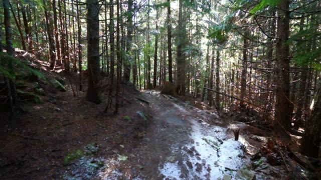 snowfall on hiking trail amidst trees in forest at famous garibaldi provincial park - cheakamus lake, british columbia - garibaldi park stock videos & royalty-free footage