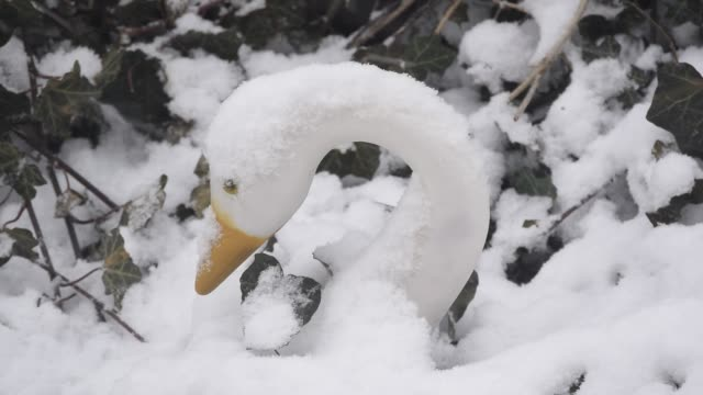 snowfall on swan statue - cigno video stock e b–roll