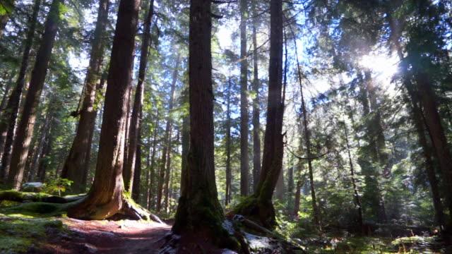 snowfall on tall trees in woodland at garibaldi provincial park during sunny day - cheakamus lake, british columbia - garibaldi park stock videos & royalty-free footage