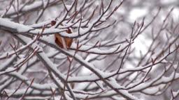 Snowfall on the tree in Mt.Hakkoda,Aomori,Japan