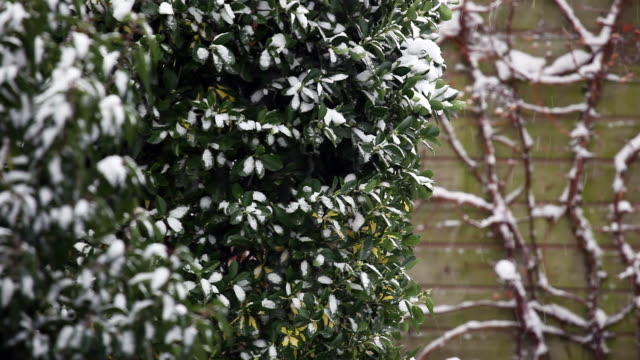 stockvideo's en b-roll-footage met snowfall - formal garden