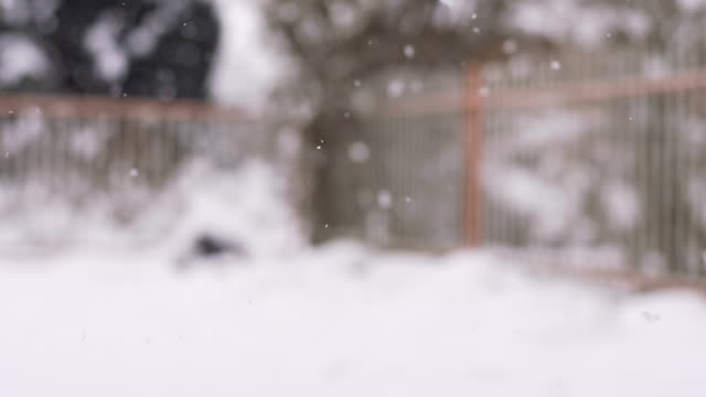 hd super slow-mo: snowfall - front or back yard stock videos & royalty-free footage