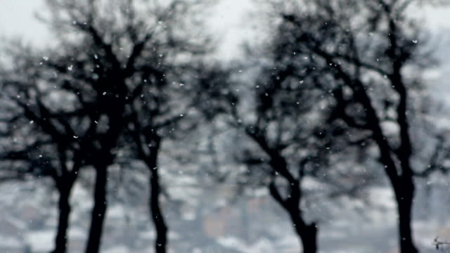 snowfalling with trees in blue background - pinaceae stock videos & royalty-free footage