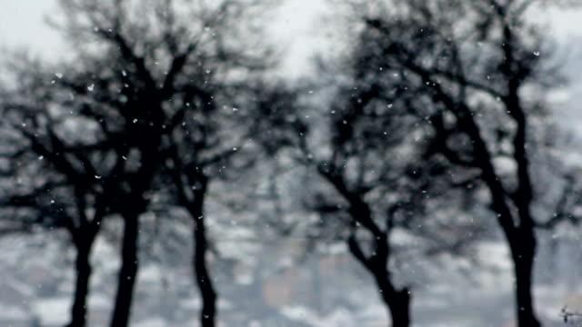 vídeos de stock, filmes e b-roll de snowfalling com árvores em fundo azul - pinhal