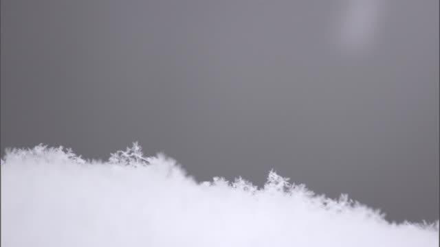 Snowflakes fall onto snowy ground, Yellowstone, USA