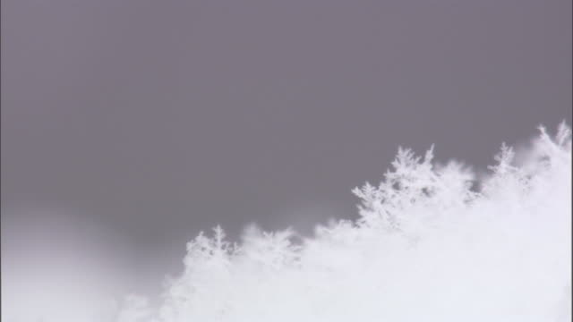 snowflakes fall onto snowy ground, yellowstone, usa - 結晶点の映像素材/bロール