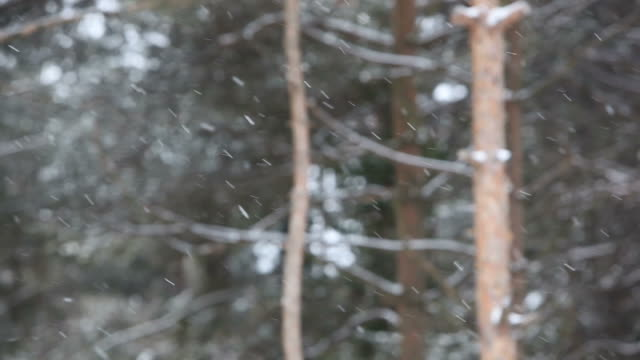 Schneeflocken fallen