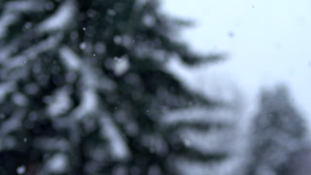 snowflakes  - slow motion - pinaceae stock videos & royalty-free footage
