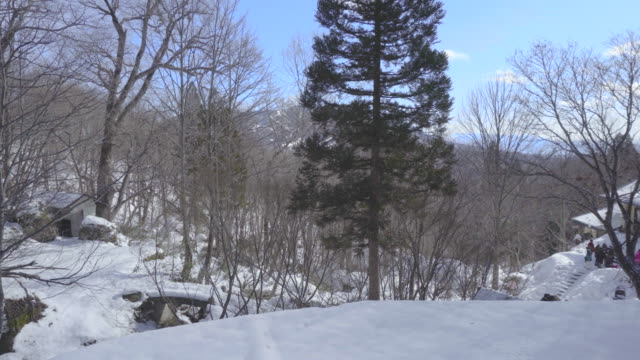 snowing forest, nagano, japan, asia - shinto shrine stock videos & royalty-free footage