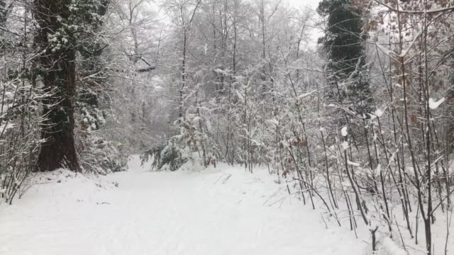 Snowing in a Forest Path
