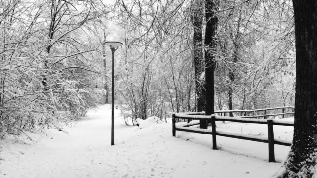 Snowing in a Forest Path with a Street Lamp