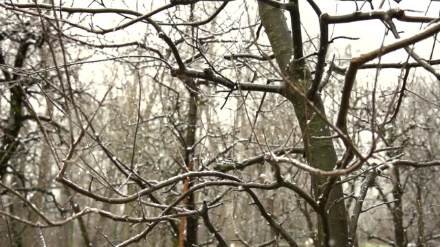 stockvideo's en b-roll-footage met hd super slow-mo: snowing in the forest - tak plantdeel