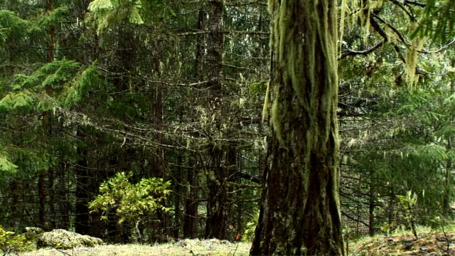 snowing in the forest - epiphyte stock videos & royalty-free footage