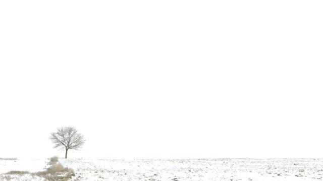 vídeos y material grabado en eventos de stock de hd:  nevar en campo - pradera