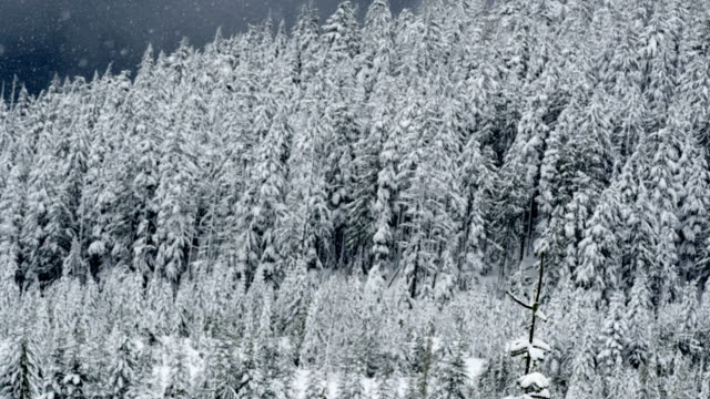 ms td slo mo snowing on trees at mountain area / squamish, bc, canada - snowing stock videos and b-roll footage