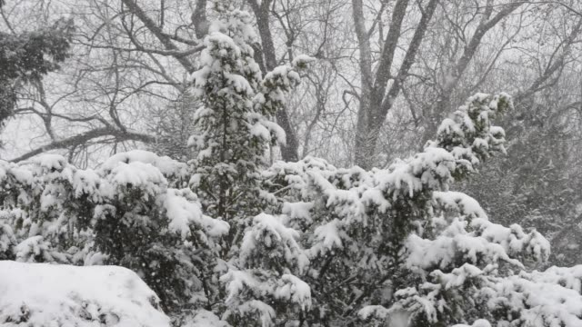 Snowing onto evergreens and deciduous trees.