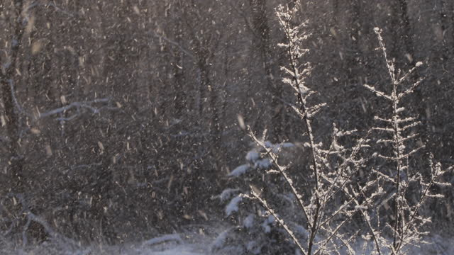 雪 - 冬のランセパエ - 雪の中の凍った森、ベラルーシ - 枝点の映像素材/bロール