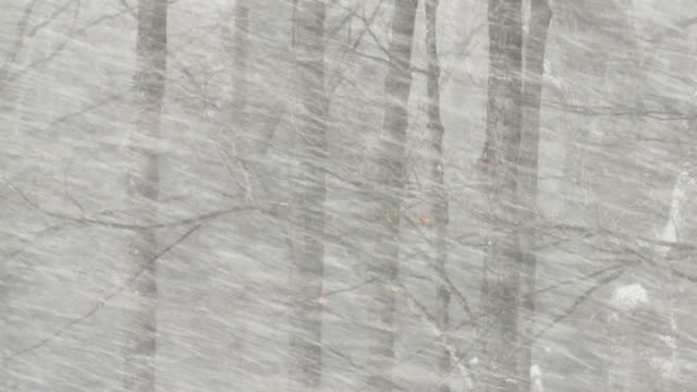 stockvideo's en b-roll-footage met ms snowstorm and trees during winter / tweed, ontaria, canada - sneeuwstorm