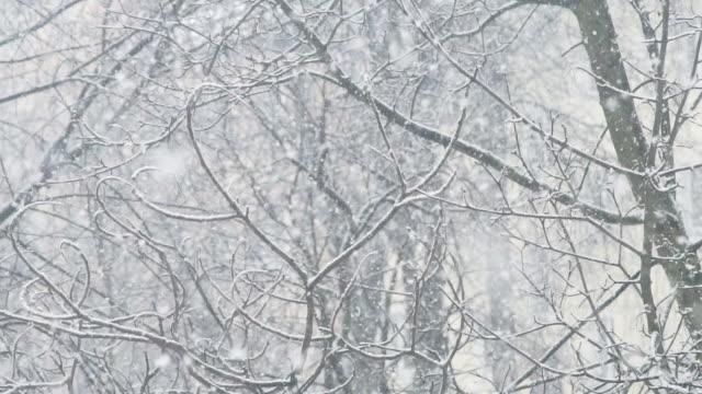 Snöstorm bakgrund