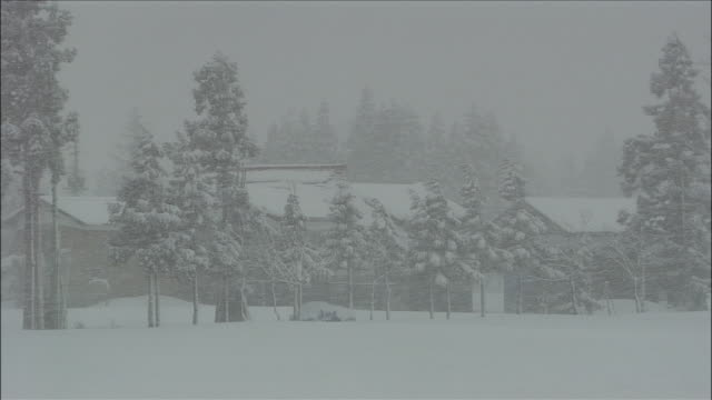 Snowstorm blows across trees and houses, Yokote, Akita, Japan