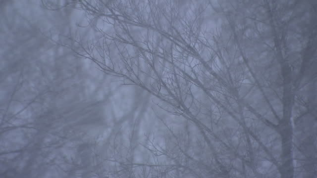 Snowstorm, Hokkaido, Japan