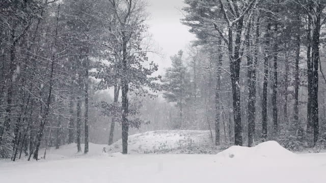 snowstorm in woods locked down - snowing stock videos and b-roll footage