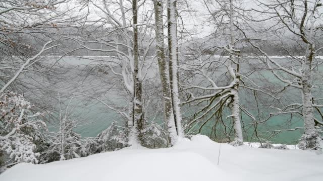vídeos de stock, filmes e b-roll de snowy beech trees at the lake walchensee in winter, walchensee, upper bavaria, bavaria, germany, european alps - alpes bávaros